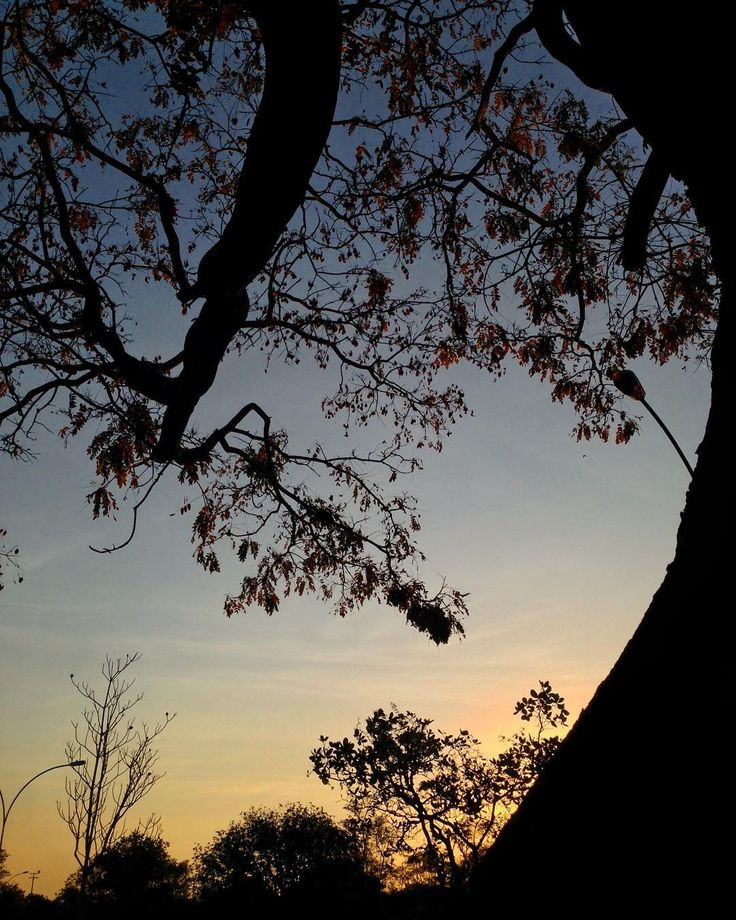 Fim de tarde  . . . . . #parquedacidade #brasília #sunset #pordosol #arvoresdebrasilia #igersbsb #ceuomardebrasilia #saved #naturelovers