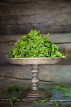 I love, love love spruce tips. http://www.jotainmaukasta.fi/2015/06/13/kuusenkerkkasiirappi/