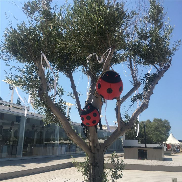Ladybug backpack. The perfect gift for kids