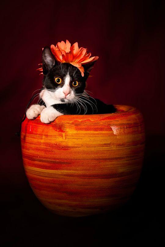 Flower Kitten byChristophe Kiciak