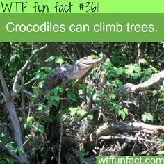 Facts about Crocodiles you SHOULD know! -WTF!?! - fun facts