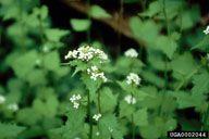 Weeds | Weed Science Society of America