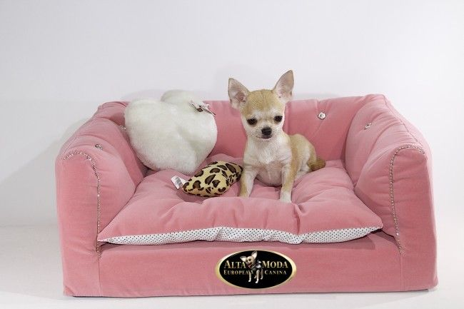 Memory Foam Mattress Mold Problems 1000+ images about MASCOTAS on Pinterest | Chihuahuas, Cats and Puppys