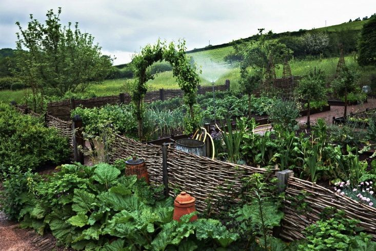 Kitchen vegetable garden enclosed by a wattle fence and bordered by rhubarb. | jardin potager | bauerngarten