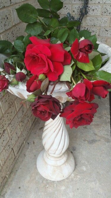 Various red roses from my garden Black Beauty, Tatjana and more