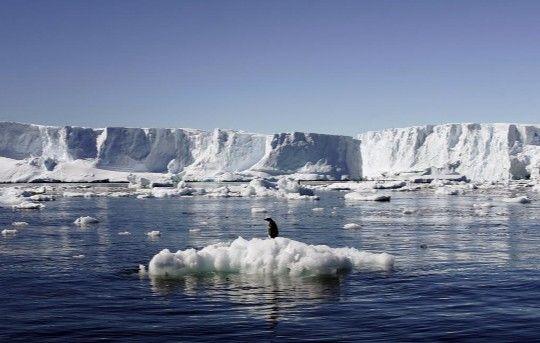 Un pingüino flota sobre un pedazo de hielo desprendido en la Antártida. REUTERS