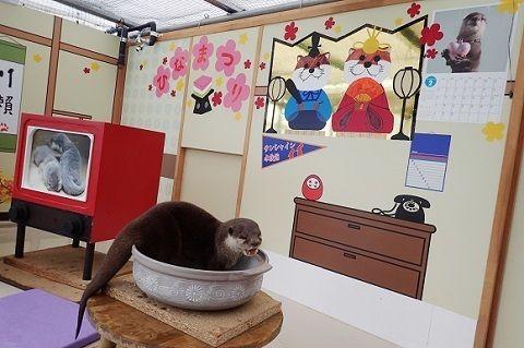 カワウソたんも「ひな祭り」をお祝いするよ! サンシャイン水族館がコツメカワウソ母娘の特別展示を実施中