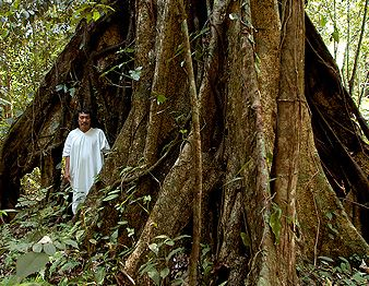 Selva Lacandona :: Mundo Maya #Chiapas #VisitMexico