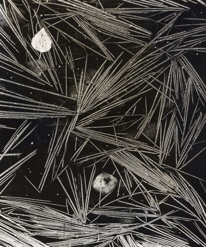 Flooded Grass by Fay Godwin - British Library Prints