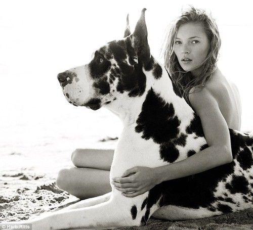Love: Huge Dogs, Puppies, Harlequin Great Danes, Herbs Ritts, Pet, Katemoss, Big Dogs, Kate Moss, Animal