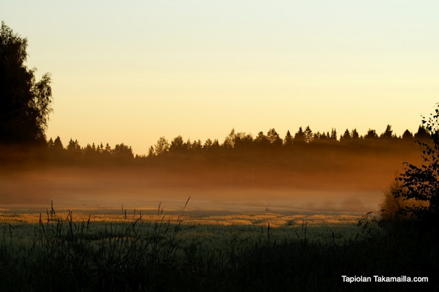 auringonnousu heinäkuussa / Dawn in July