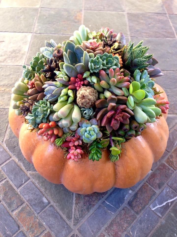 A beautiful succulent pumpkin created by a talented designer and friend, Denise Chippero.