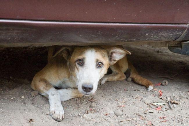 A Barcellona assistenza agli animali feriti