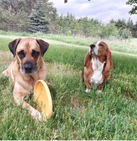 Animals Unfolded: The ties that bind: giving familial dogs physical and mental space is essential for their emotional health