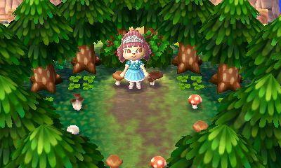 Forêt composé de cèdre et de champignons variés