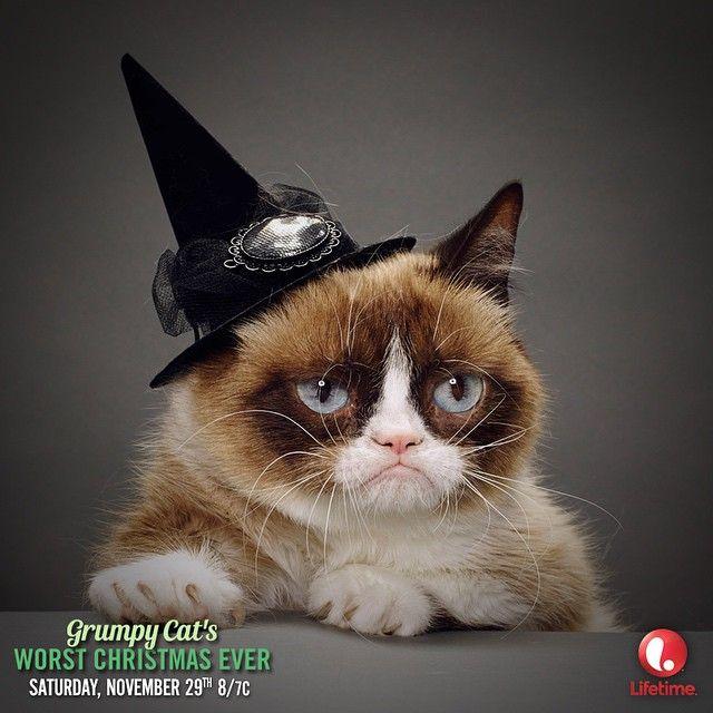 Grumpy Cat Birthday Youtube: 343 Best Images About Memes: Grumpy Cat On Pinterest