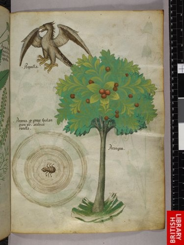 Miniature of a tree, a spider web, and an eagle.   Origin:Italy, N. (Lombardy)