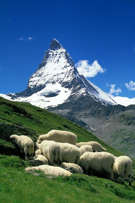"Matterhorn, Switzerland - Sheep can climb to the top of mountains...I saw this in Scotland. We JW's go to the ends of the earth to find a ""sheeplike"" person, in obedience to Jesus command: ""Feed my sheep. Shepherd my young lambs."""