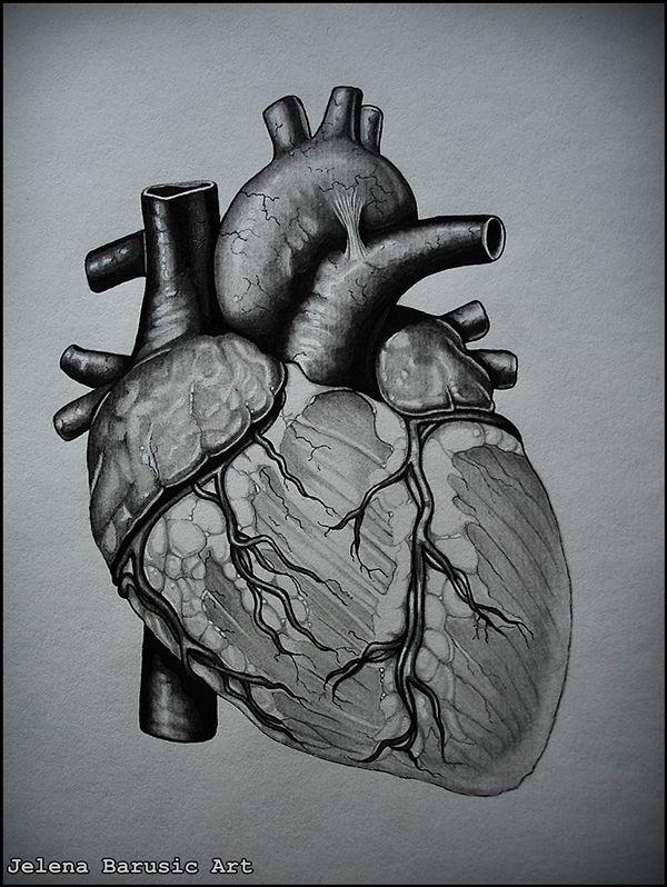 Картинка человеческого сердца для срисовки