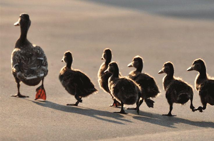 Biologie im Business - Die Naturgesetze der Führung