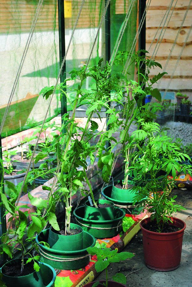 Grow Your Own Container Garden in soil sacks with twine trellis Ve ables GardenVe able GardeningUrban