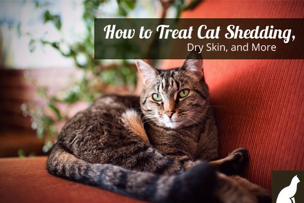 How To Treat Cat Shedding, Dry Skin, & Other Skin and Coat Conditions - http://go.homesalive.ca/dog-cat-learning-centre/bid/131498/How-To-Treat-Cat-Shedding-Dry-Skin-and-More