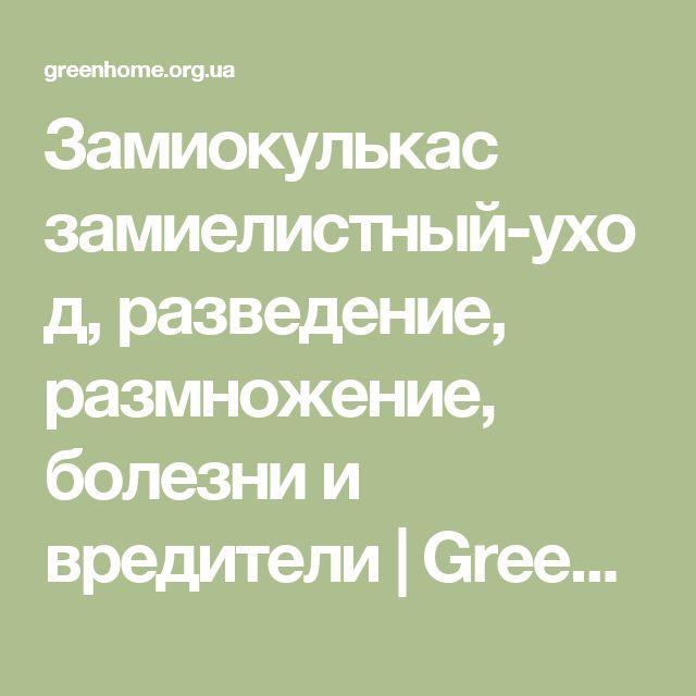 Замиокулькас замиелистный-уход, разведение, размножение, болезни и вредители   GreenHome