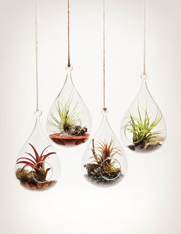best 25 indoor hanging plants ideas on pinterest hanging plant hanging plants and plants. Black Bedroom Furniture Sets. Home Design Ideas