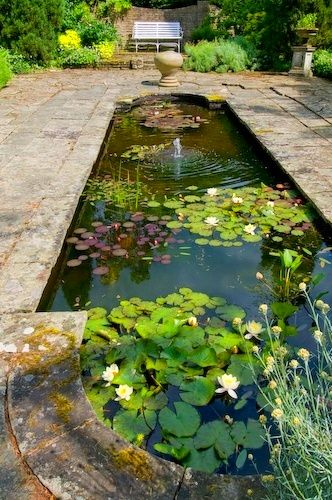 Formal pool with water lilies.