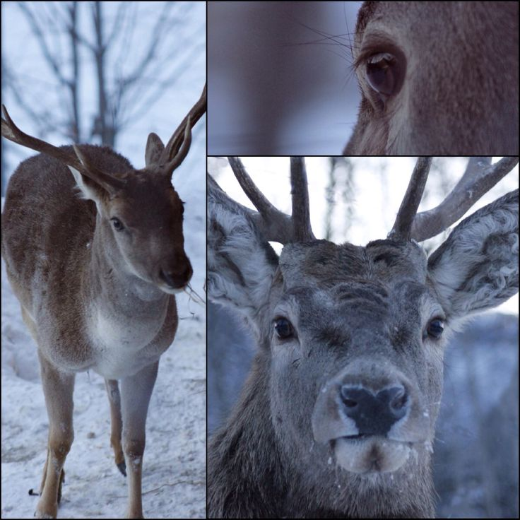 Deer collage