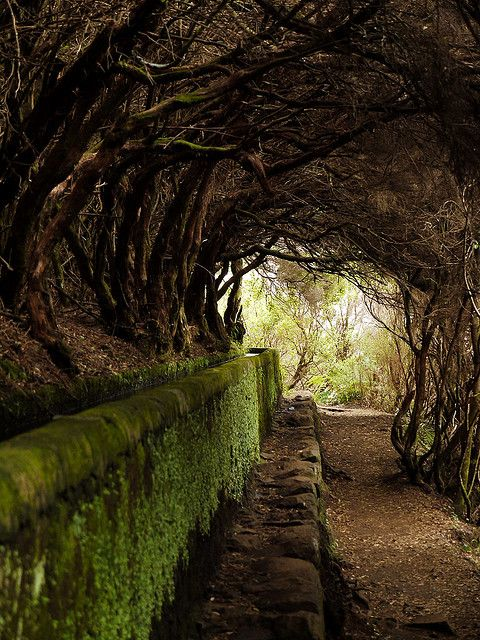 Tree Tunnel, Maderia, Portugal by Dan Knowle