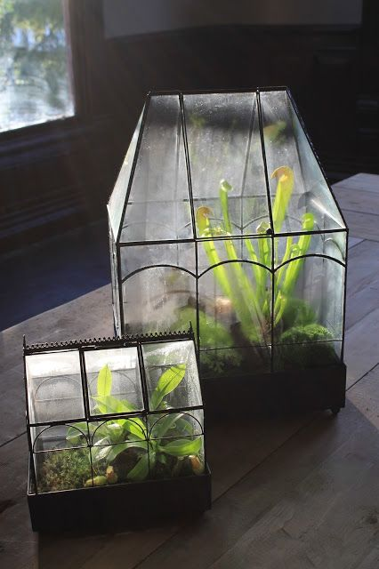 Joshua Stenzel Design. pitcher plants. Carnivorous plants. terrariums. greenhouse.