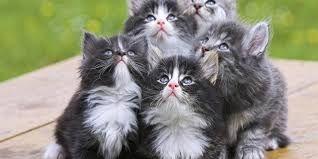 Risultati immagini per gattini simpatici