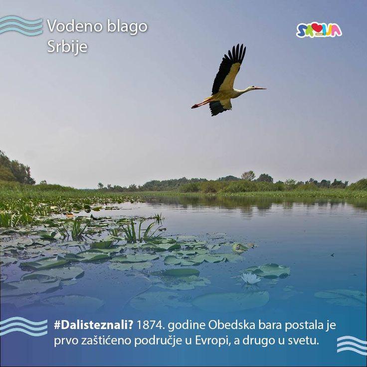 https://www.facebook.com/turisticka.organizacija.srbije/photos/a.120539177967257.14319.118118978209277/1187856694568828/?type=3