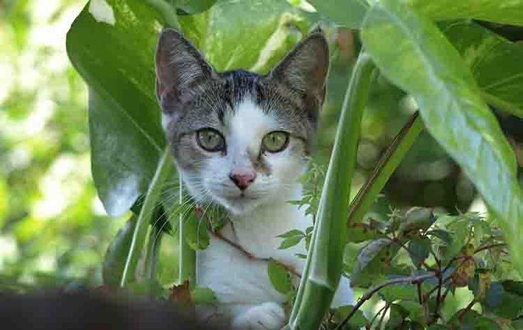 REPELENTE PARA GATOS Como ahuyentar gatos sin lastimarlos!