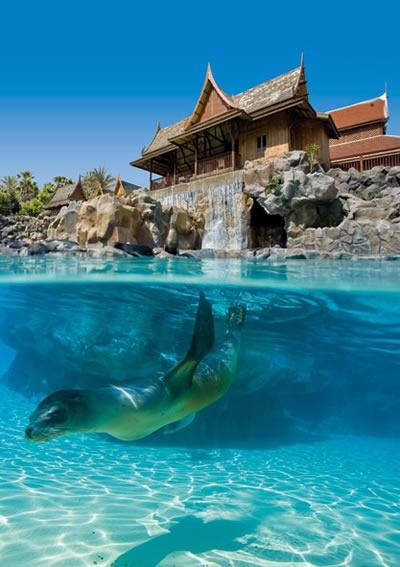 Siam Park. Tenerife. In het Siam Park hebben ze ook zeeleeuwen, een van me lievelingsdieren.