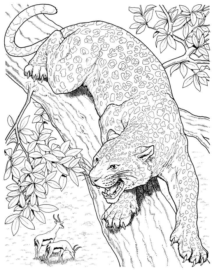 Готовые рисунки животных