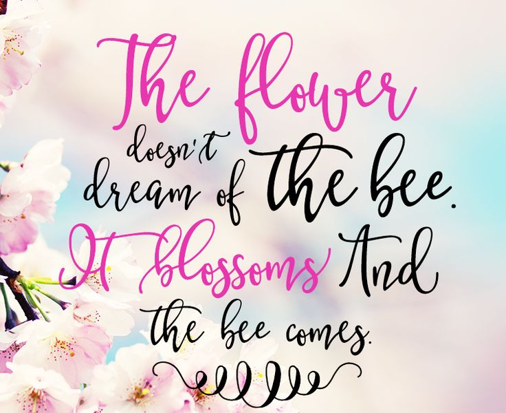 The Flower Doesn't Dream Of The Bee. It Blossoms And The Bee Comes. #quotes  #livethelifeyoulove #inspiration #awakening #awareness #consciousness #lawofattraction #loa #positiveenergy #manifestation #powerthoughtsmeditationclub @powerthoughtsmeditationclub