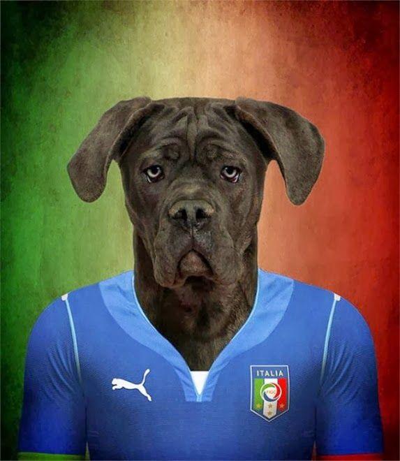 Amedeo Liberatoscioli: Brasile - Coppa del mondo 2014
