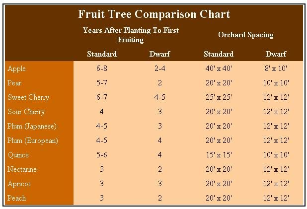 Using Dwarf Fruit Trees in Your Home Orchard Dwarf fruit trees produce normal-sized fruit in a fraction of the time. Plus, a short guide to growing nut trees.  Read more: http://www.motherearthnews.com/organic-gardening/dwarf-fruit-trees-zmaz70mazkin.aspx#ixzz2aly1M9gn