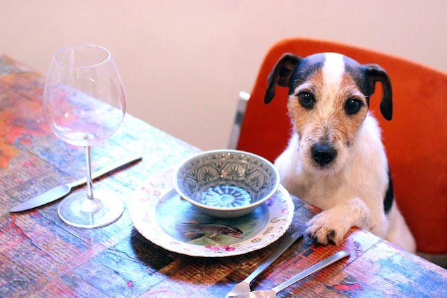 http://www.minden-ami-kutya.hu/products/gyerekkel-itt-nem-vacsorazhat-kutyaval-viszont-igen/