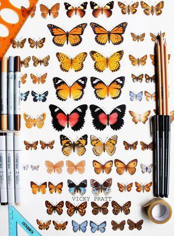 Australian butterfly collection by Vicky Pratt. Copic markers and coloured pencil. Vicky Pratt -Illustrator on Facebook and Instagram www.vickyprattillustrator.com