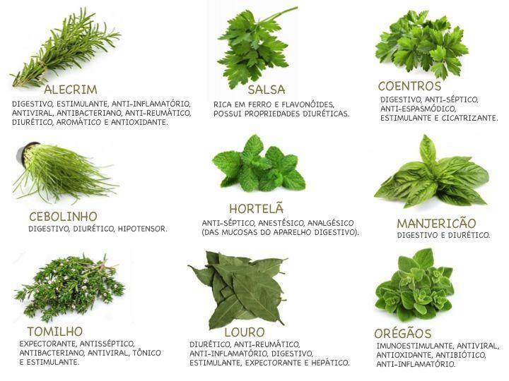 Fique a conhecer o uso culinário, curiosidades e dicas sobre várias ervas aromáticas.
