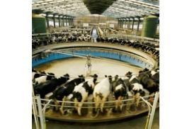 """Ferme des """"Mille vaches"""" : la justice rejette la demande de suspension du permis de construire"""