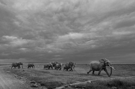 Trumpeting elephants Photo by Kesavamurthy Narasimhamurthy -- National Geographic Your Shot