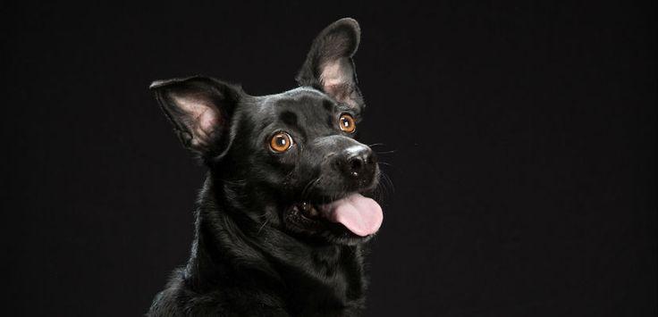"""Las fotografías de Fred Levy contra el """"síndrome del perro negro"""" - http://www.mundoperros.es/las-fotografias-de-fred-levy-contra-el-sindrome-del-perro-negro/"""