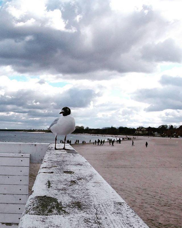 #mewa#sopot #trojmiasto #poland#lubiepolske #explorepoland #morze#sea#balticsea #spring#nature#naturelovers #bird #love#landscape #instanature