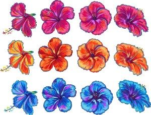 HIBISCUS FLORAL HAND DRAWN VECTOR SET - http://freepicvector.com/hibiscus-floral-hand-drawn-vector-set/