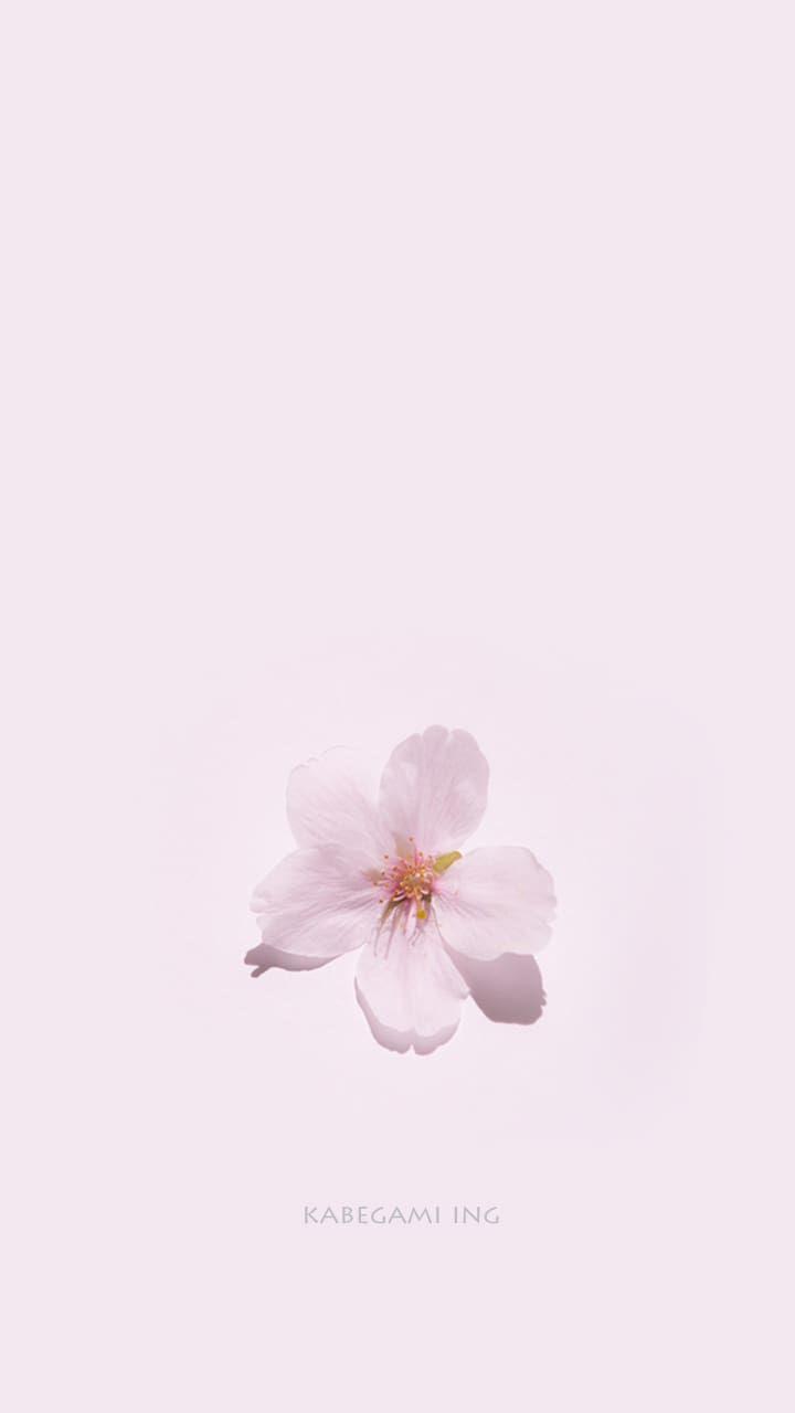 桜 スマホ壁紙 壁紙ing管理人の写真ブログ 桜の壁紙 桜イラスト 花 壁紙
