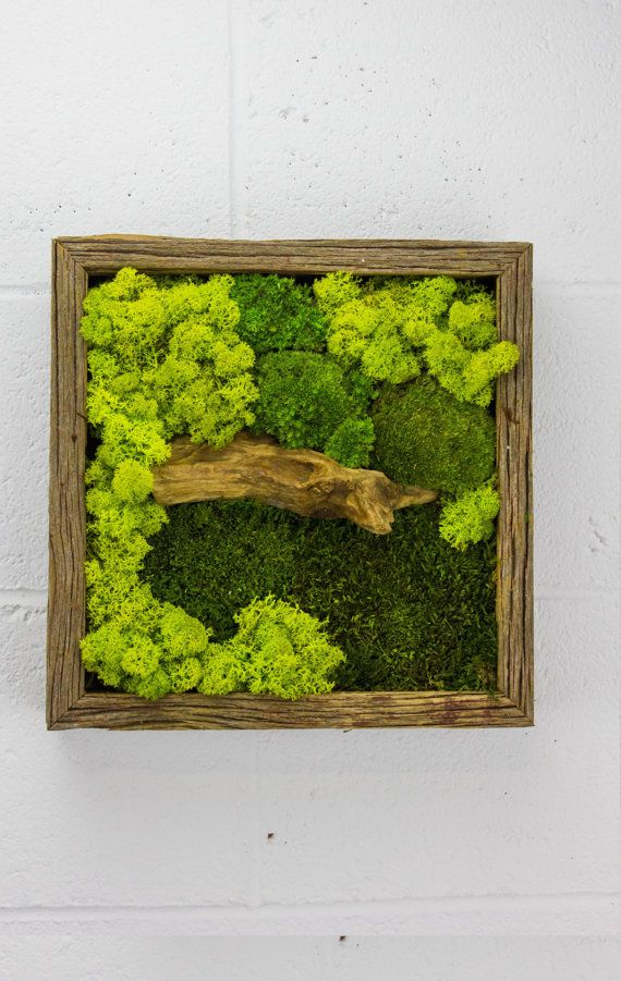 "Green Bridge - Water free green wall art, moss and preserved plants - Vertical garden, green wall decor - 12""x 12"" Rustic Frame"